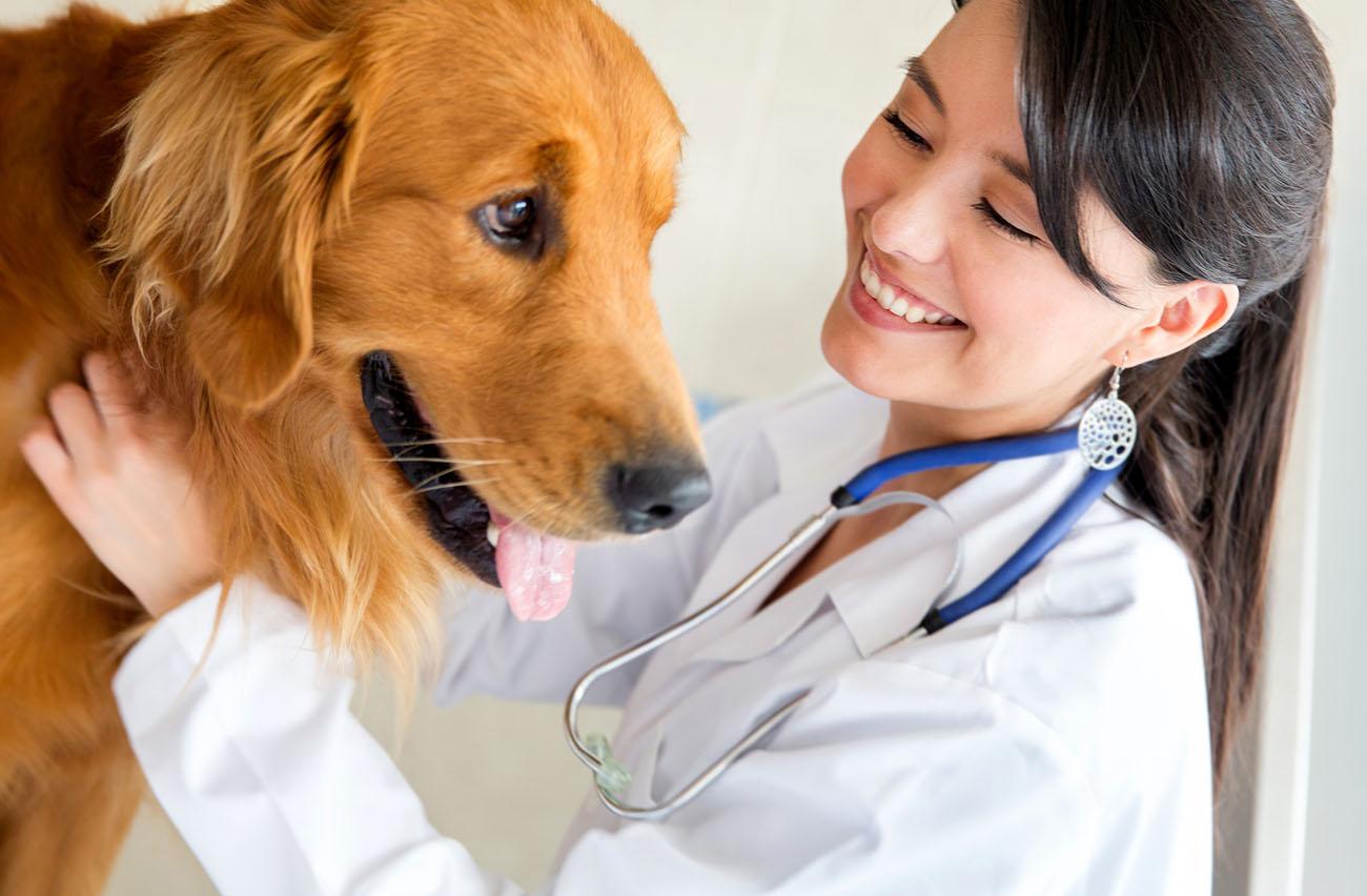 Especialista em Dermatologia Veterinária